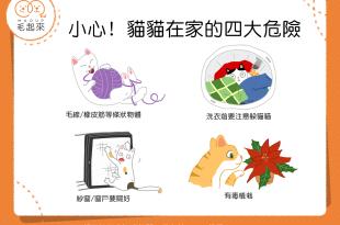 【喵喵家居】貓貓在家好安全?居家危險要注意!