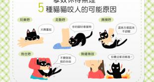 【喵喵行為學】貓貓喜怒無常老是亂咬人?咬人原因大解析!