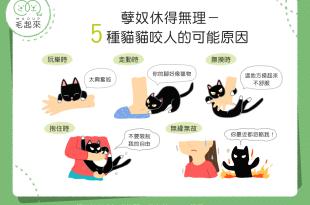 【喵喵行為學】貓貓喜怒無常老是亂咬人?貓貓的咬人原因大解析!