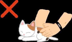 不要碰觸/移動小貓