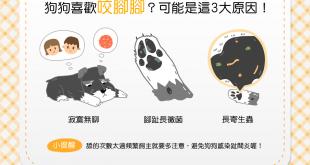 【汪汪康健】蝦密?!狗狗喜歡咬腳腳?!3大可能原因要注意!