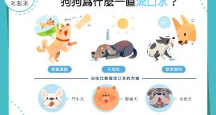 【汪汪行為學】狗狗老是流口水?難道是想到好吃的東西嗎?!