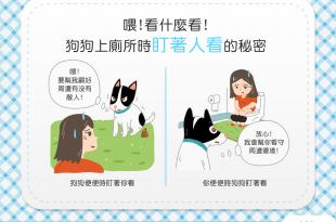 【汪汪行為學】「棒賽」魅力大?!狗狗上廁所時盯著人看的祕密