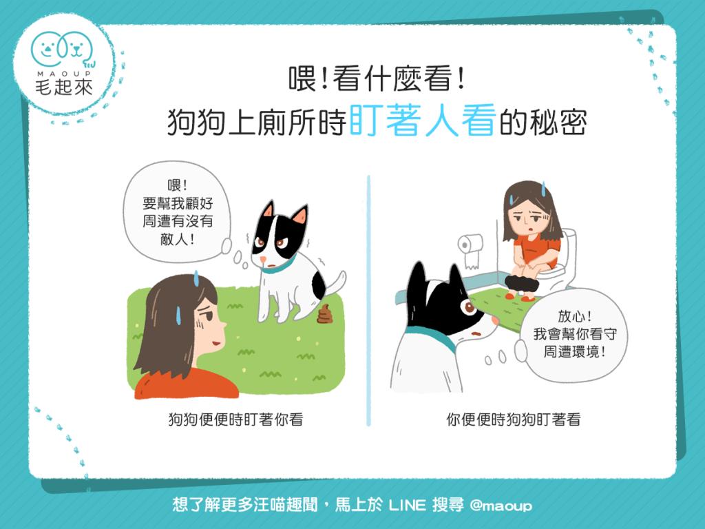 【汪汪行為學】「棒賽」魅力大?狗狗上廁所時盯著人看的祕密