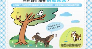 【汪汪行為學】咦?狗狗抬腳尿尿揪竟是為什麼咧?