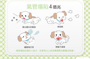 【汪汪康健】家有小型犬嗎?當心這4個氣管塌陷的徵兆!