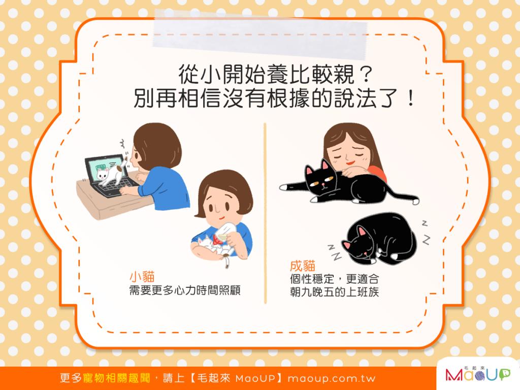 【我要領養喵】貓貓從小養比較親?別再相信沒有根據的說法了!