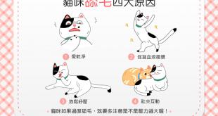 【喵喵行為學】你知道貓貓天天舔毛「洗香香」的原因嗎?