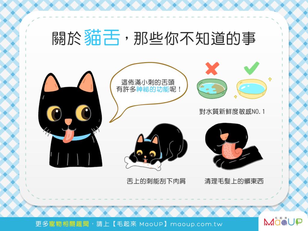 【喵喵小學堂】刺刺貓舌知多少?貓舌頭的3大神奇功能!