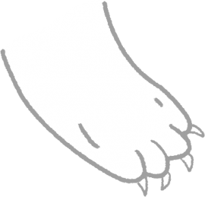定期1~2週剪指甲