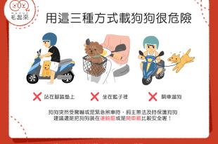 【汪汪兜風趣】危險!你還在用這3種方式載狗狗兜風嗎?!