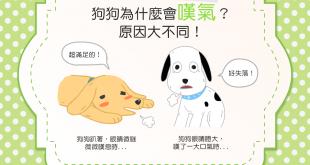 【汪汪真心話】狗狗又「嘆大氣」了?原因其實很兩極喔!