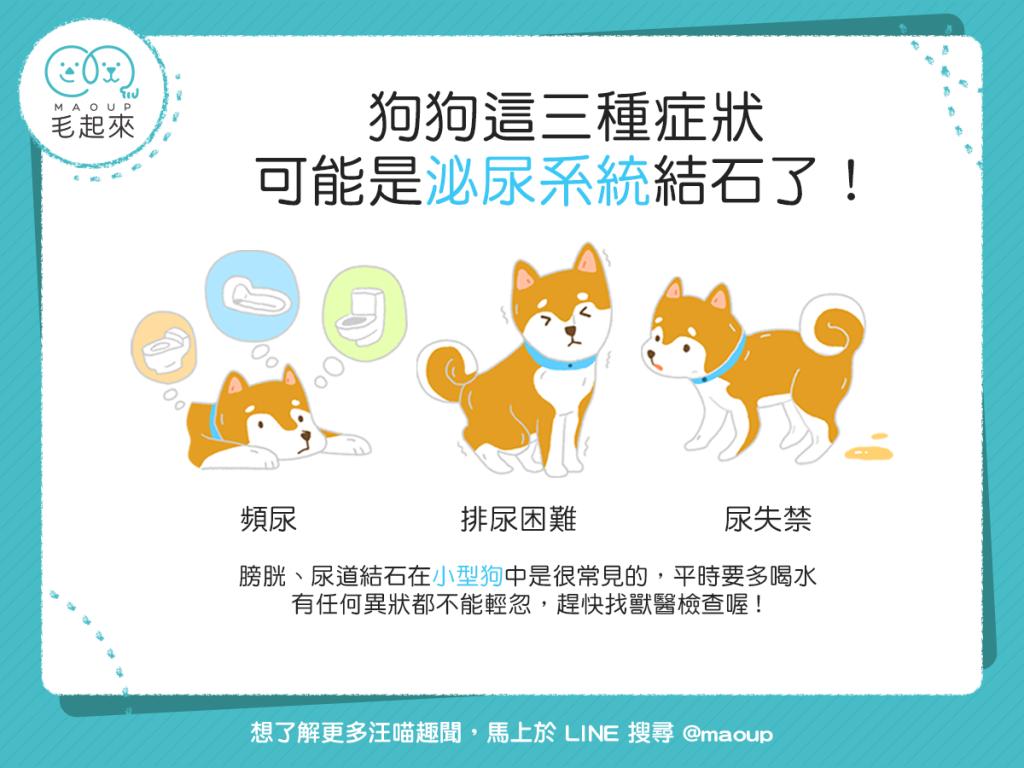 【汪汪康健】狗狗有這3種問題嗎?可能是泌尿系統結石了!