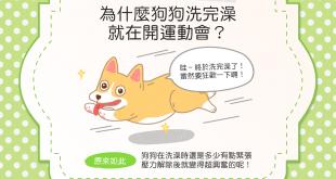 【汪汪行為學】咦?狗狗洗完澡怎麼又~在開運動會啦?