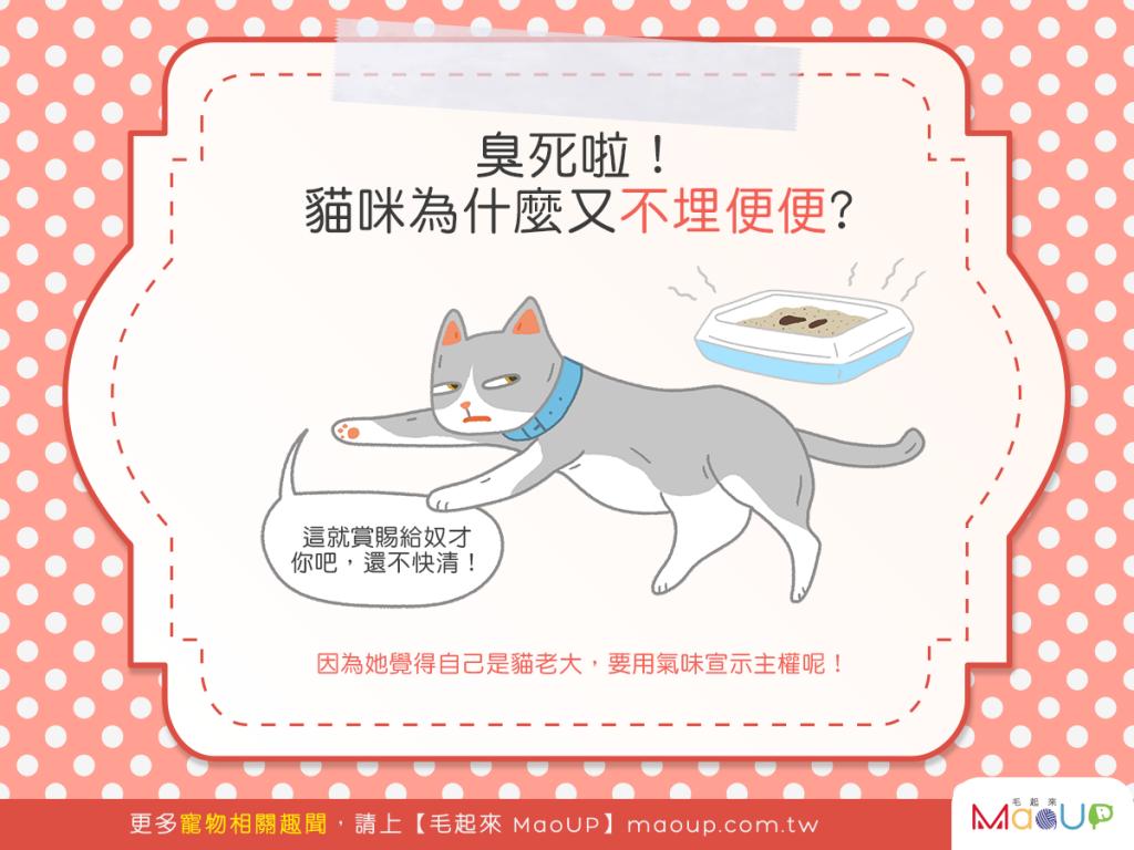 【喵喵真心話】臭死啦!貓貓為啥又不埋便便了?!(大哭)