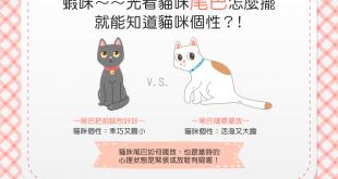 【喵喵的個性占卜】光看貓咪尾巴怎麼擺,就能知道貓咪個性?