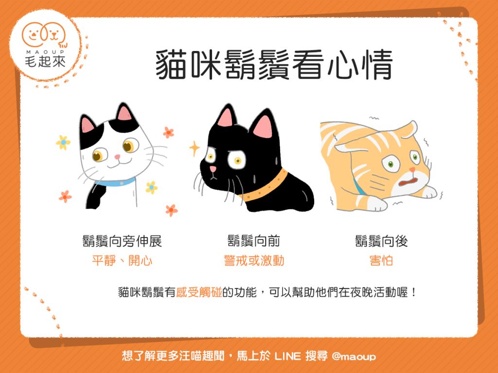 【貓語大揭密】看貓貓的鬍鬚往哪擺,就能讀懂貓貓的心情?