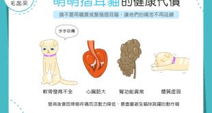 【喵喵小學堂】摺耳貓貓好可愛?你知道牠們承受了多少痛苦嗎?