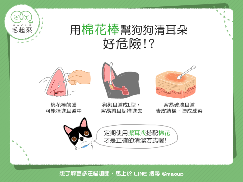 【日常清潔要注意】危險!你還在用棉花棒幫狗狗清耳朵嗎?