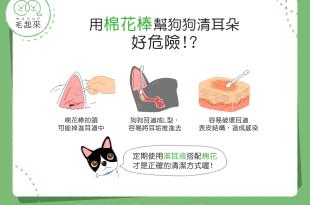 棉花棒幫狗清耳朵可能發生三個危險