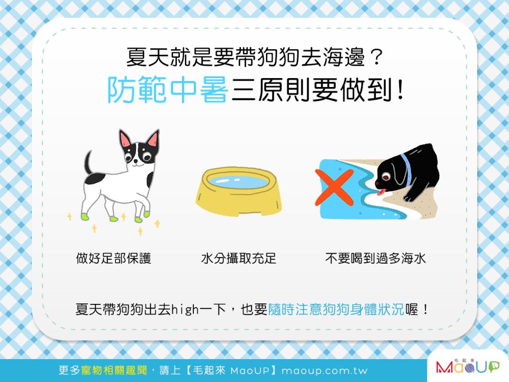 【汪汪出門趣】夏天帶狗狗去海邊好開心?熟記3原則防中暑!