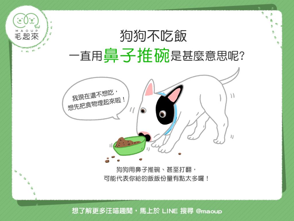 【汪汪行為學】哎唷…狗狗不吃飯,一直用鼻子推碗到底怎麼了?