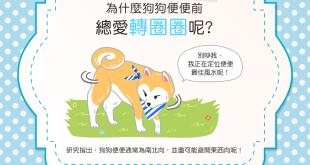 【汪汪行為學】怪拐~為什麼狗狗便便前總愛轉圈圈咧?