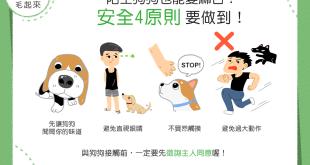【汪汪小學堂】陌生狗狗也能變麻吉?安全4原則要做到!