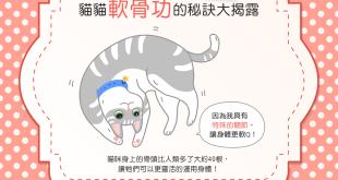 【喵喵小學堂】為什麼貓貓都會軟骨功咧?秘訣就在……