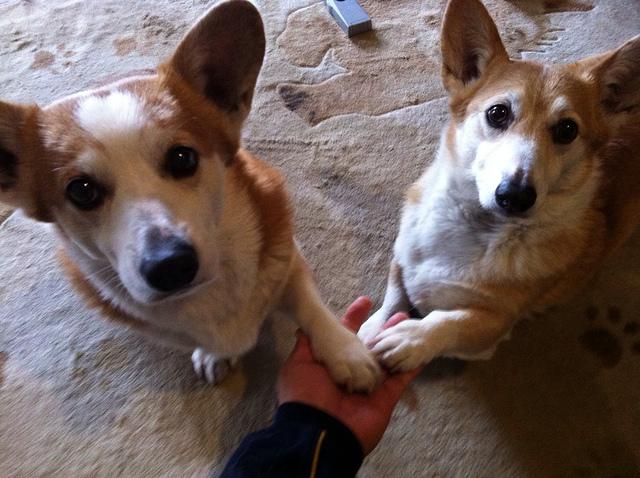 KOGI and WEL お手♪