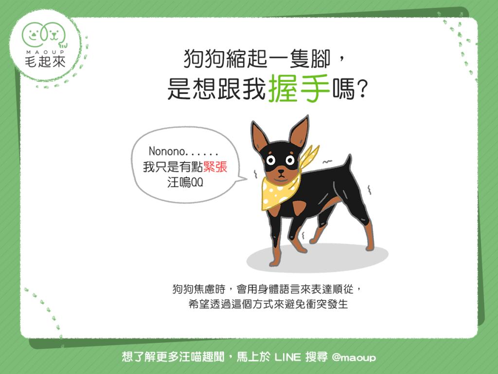 【汪汪行為學】狗狗縮起一隻腳,是想跟我握手嗎?