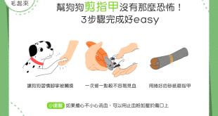 【飼主看過來】幫狗狗剪指甲沒那麼恐怖!3步驟完成好easy