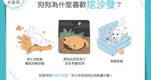 【汪汪行為學】狗狗老是喜歡挖沙發,難道是在找寶物嗎?