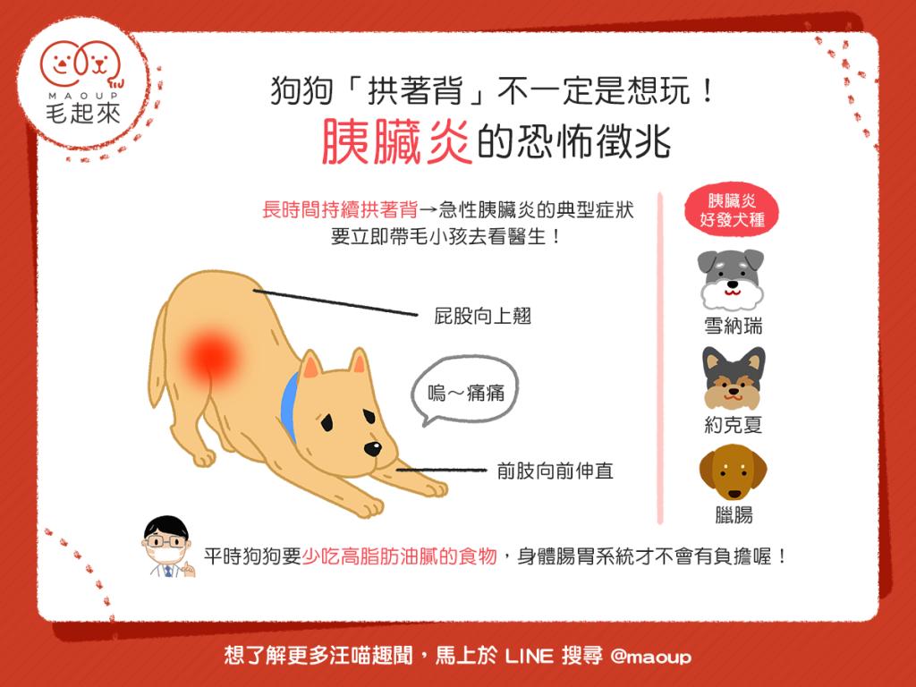 【汪汪康健】狗狗「拱著背」不一定是想玩!胰臟炎的恐怖徵兆!