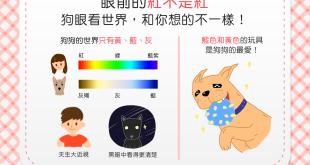 【汪汪小學堂】眼前的紅不是紅?狗眼看世界,和你想的大不同!