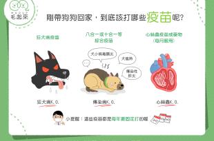 【新手爸媽看過來】剛帶狗狗回家,到底該打哪些疫苗呢?