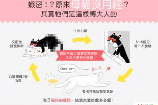 【喵喵冷知識】原來母貓沒月經?其實牠們是這樣轉大人的……