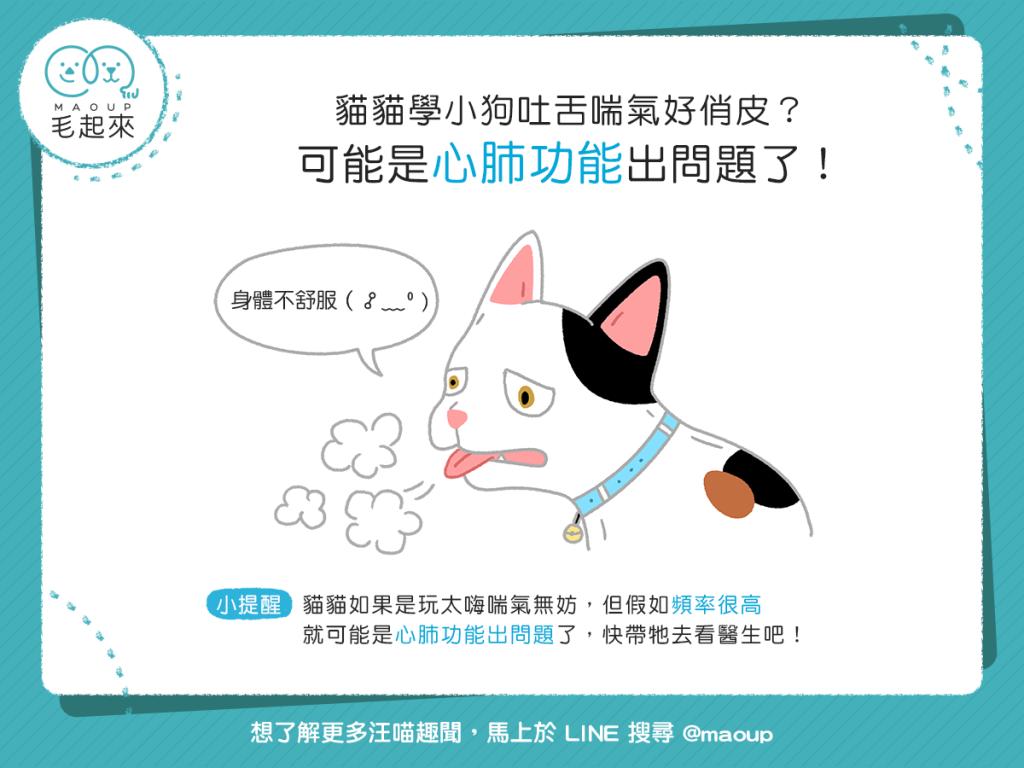 【喵喵康健】貓貓學小狗吐舌喘氣?可能是心肺功能出問題了!