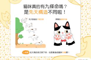 【喵喵小學堂】貓貓從高處跳下來也沒事,是真的有九命嗎?!