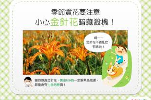 【危險植物別靠近】季節賞花好愜意?當心!金針花暗藏殺機!