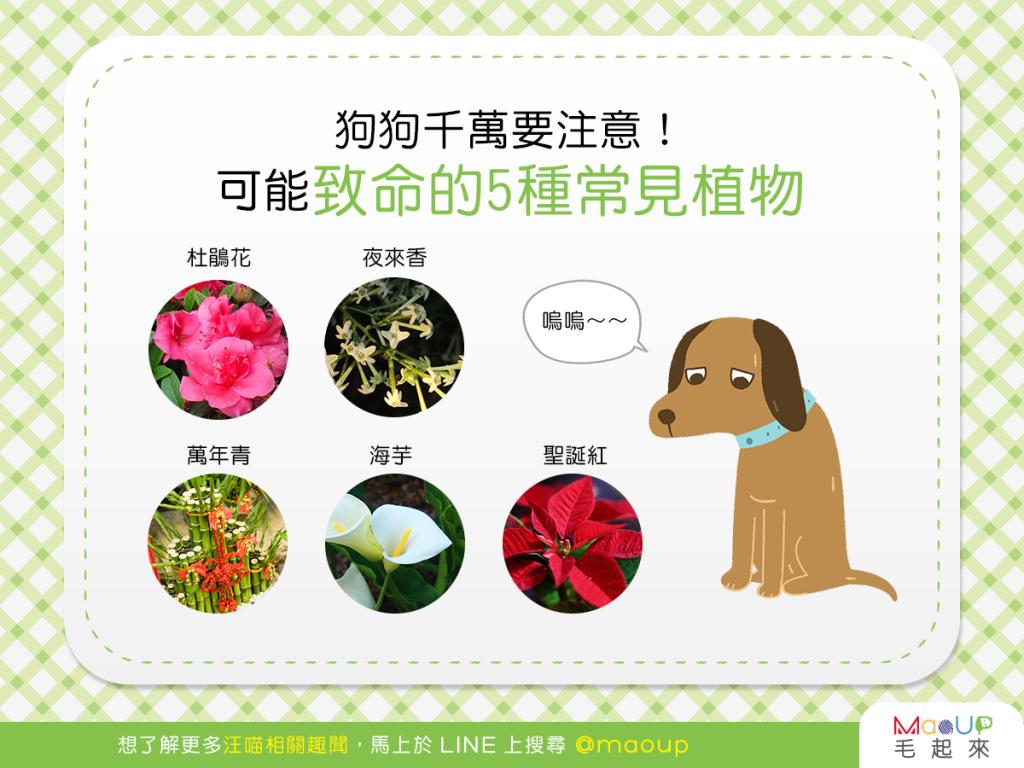 【危險植物別靠近】狗狗別靠近!可能致命的5種危險植物