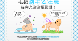 【汪喵康健】把毛孩剃光光才涼爽?狗狗貓貓光溜溜更難受!