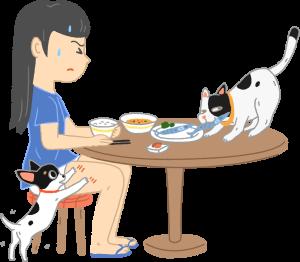 貓狗寵物討食搶食飼主謹守如何阻止主人隨意餵養拜託餓