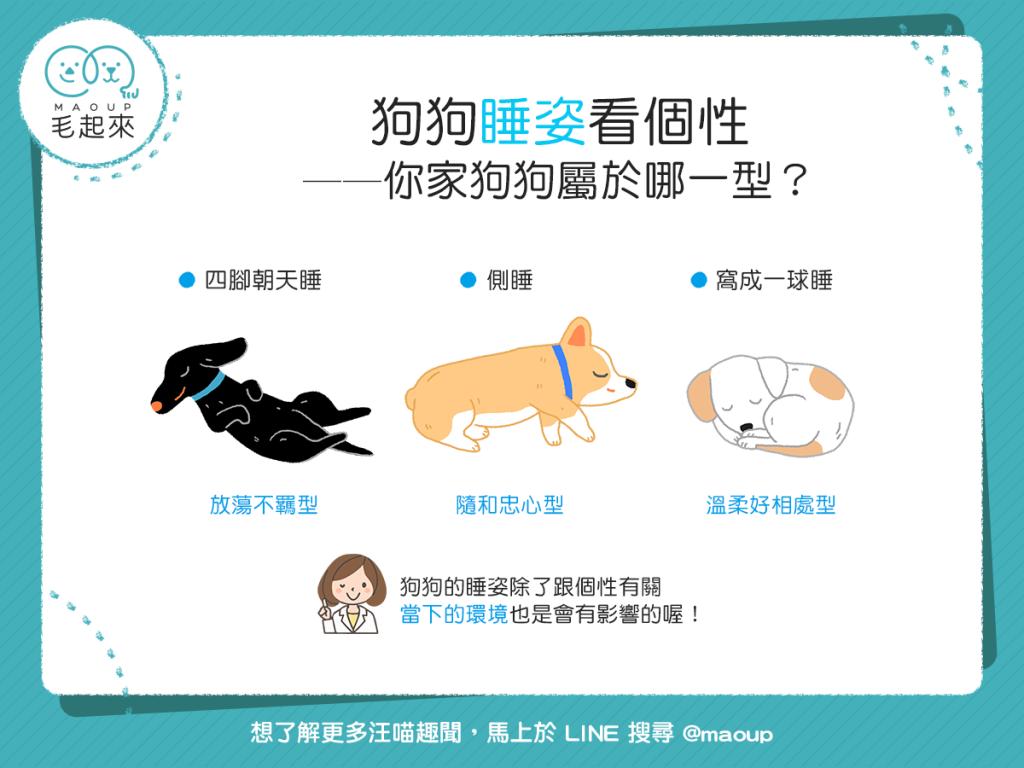 【汪汪的個性占卜】超神奇!看狗狗的睡姿,就能看出個性?!