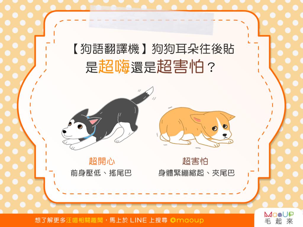 【狗語翻譯機】咦?狗狗耳朵往後貼,是超嗨還是超害怕?