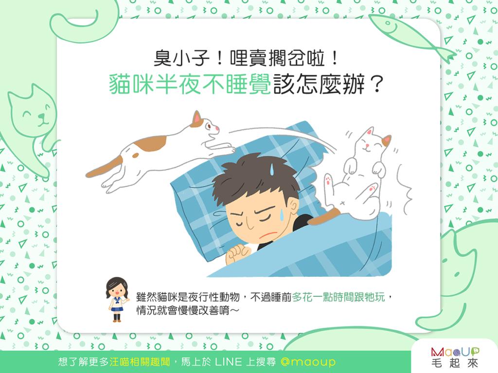 【喵喵訓練術】貓咪半夜不睡覺該怎麼辦?還我一夜好眠!