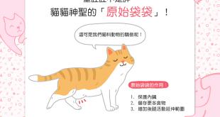 【喵喵知識加】貓貓肚肚有一大坨垂肉肉,難不成是啤酒肚?!