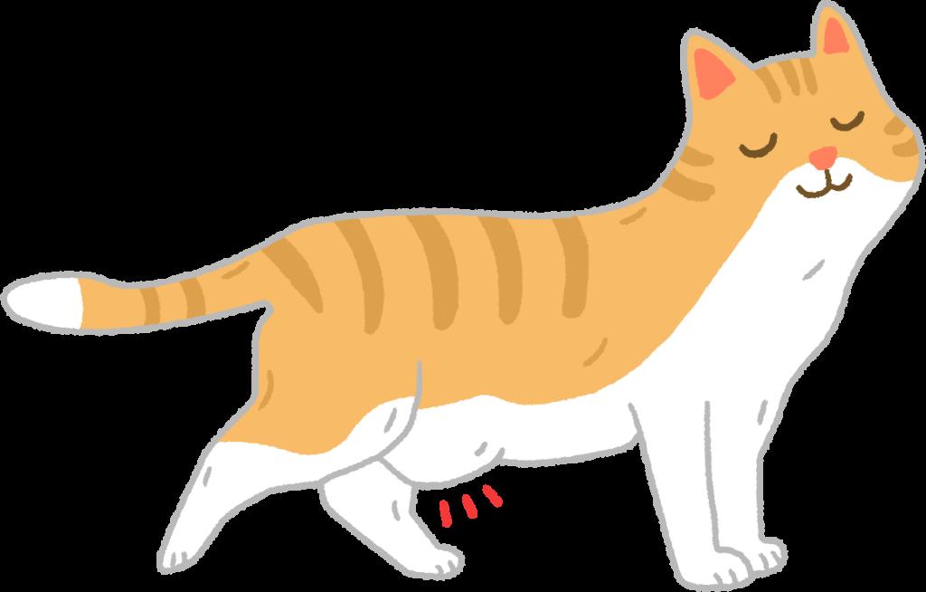 【喵喵知識加】垂肚肚不是胖!是貓貓神聖的「原始袋袋」啦!