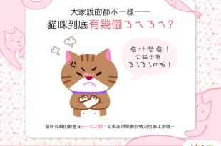 【喵喵冷知識】6個、8個還是12個?貓咪到底有幾個ㄋㄟㄋㄟ?