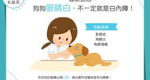 【汪汪康健】咦?狗狗眼睛白白的,是得了白內障嗎?